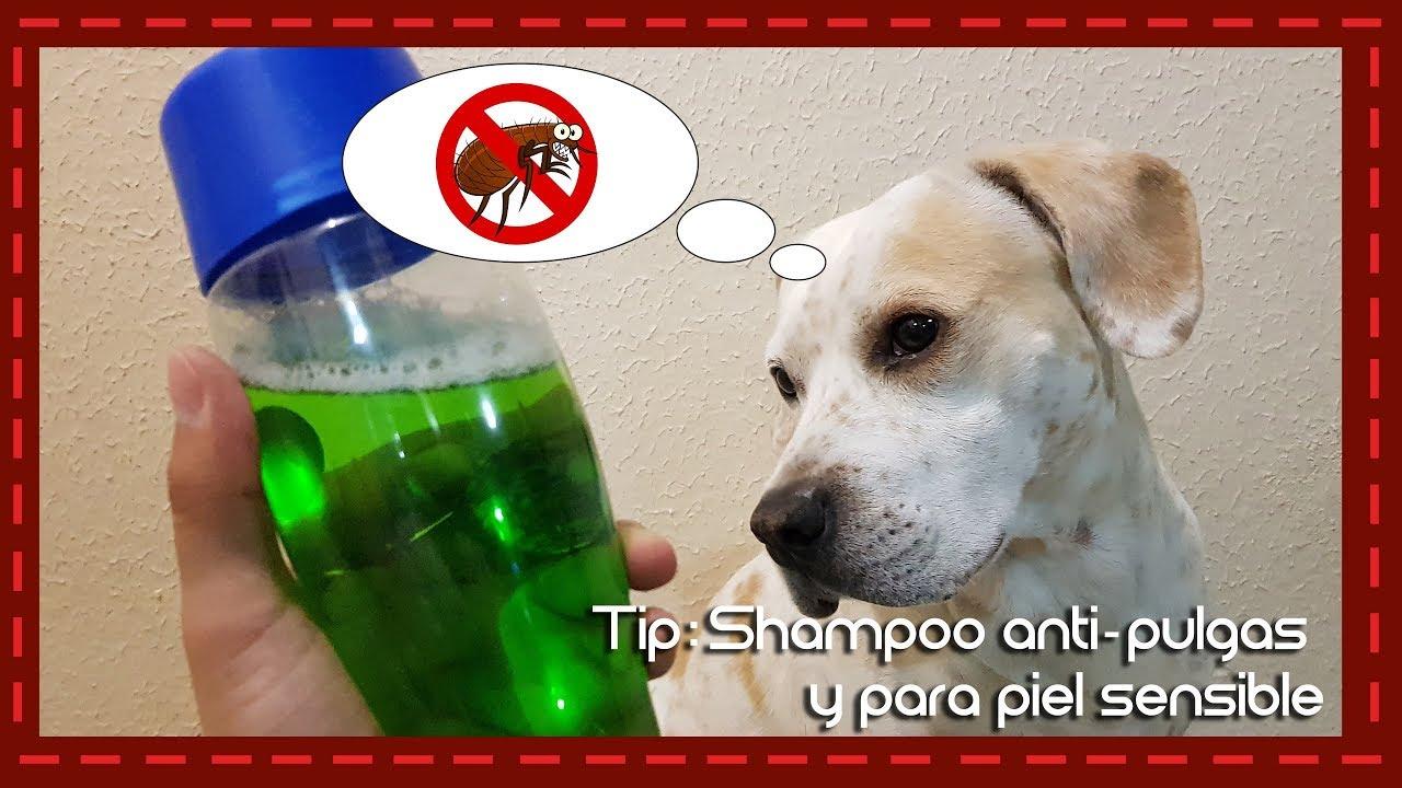 remedios caseros para la alergia de pulgas en perros