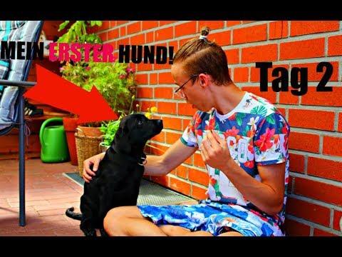 MEIN ERSTER HUND! ERSTE NACHT UND ERSTE PROBLEME! [Hunde Vlog 2] [Labrador Weplen] | Kuni