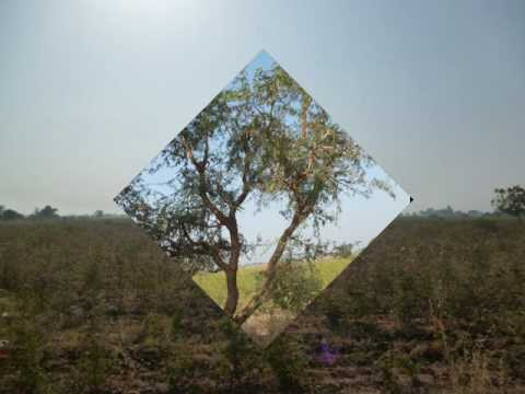 Family Land for Sale - India - Sarod-Jambusar-11.5 Acres