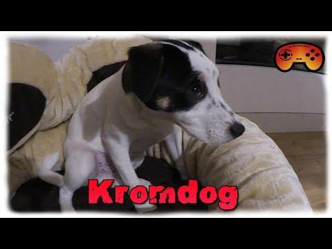 Kromdog bekommt sein Geschenk! Danke an alle Kradojaner ❤