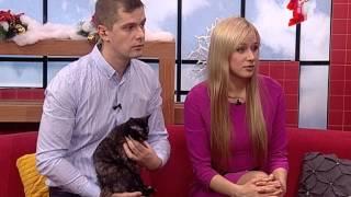 Кошкин дом: мурчащие домашние любимцы в добрые руки