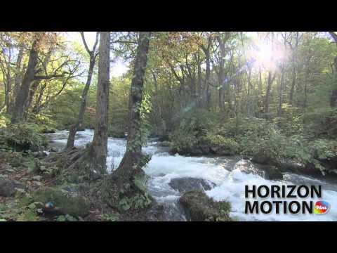日本 青森 Aomori Prefecture , Japan 奧入瀨 森林 溪 溪水 樹 陽光 hm2630000289
