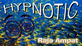Hypnotic Fish. The schooling in of Raja Ampat