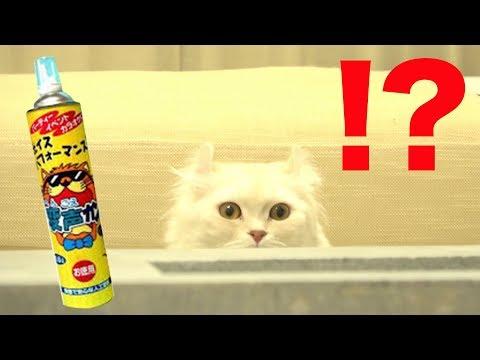 ヘリウムガスで飼主の声を変えたら猫の反応が面白すぎたw