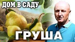 видео 8 правил обрезки груш