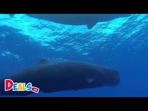 Whales Watching - Observation des baleines (Mauritius - Ile Maurice)