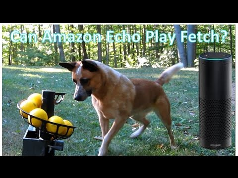 DIY Automatic Ball Launcher For Dogs (Amazon Echo Or Cell Phone Trigger)