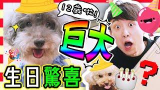 【🐶MUFFIN十二歲生日啦~🎂】籌備已久的「🎁巨大生日驚喜」!🎉還有特別的慶祝主題❤️?(中字)