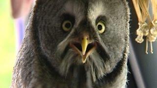 フクロウを助けたらすっかり懐いてしまい、預けた動物園から「手に負え...