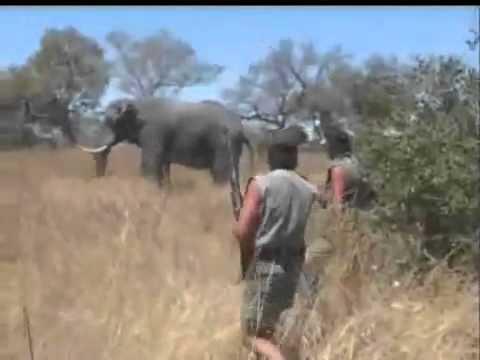 Rey Juan Carlos cazando elefantes Otros líderes también lo hacen Elephant Hunting Rann Saffari