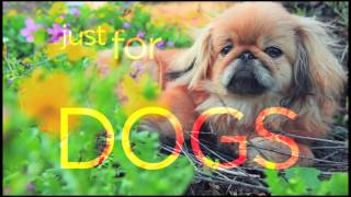 DOGTV: Promo (COX)