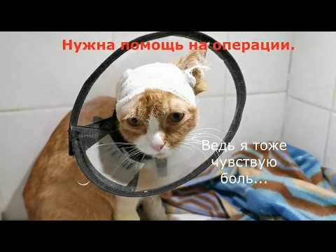 Кто то обидел кота Нужно успеть спасти Animal Shelter Saves A Stray Cat