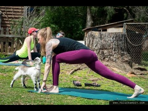 Goat Yoga at Split Creek Farms with 90-degree Yoga, Anderson SC
