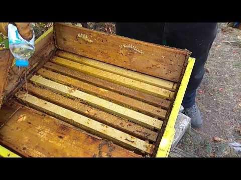 Обработка пчёл озоном