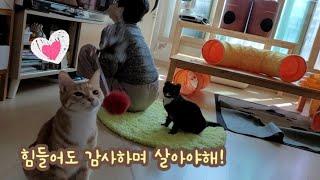 고양이와 치매엄마와 천근만근집사