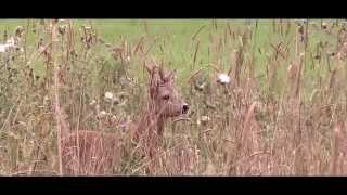 Mauser Film: Open Sight Hunter 2 - NAH AM WILD