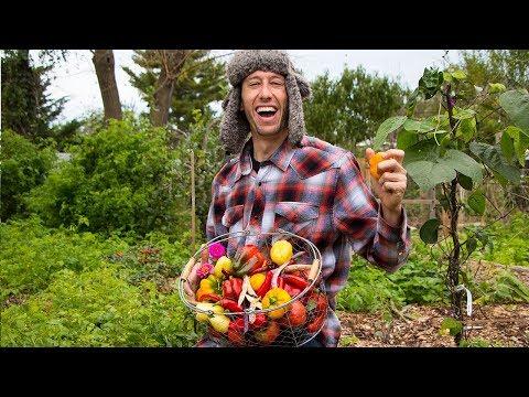 Backyard Gardening Harvest, Organic Food Forest