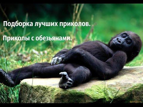 Новый 2016 год обезьяны до 2018 года осталось