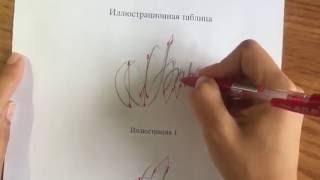 видео почерковедческая экспертиза