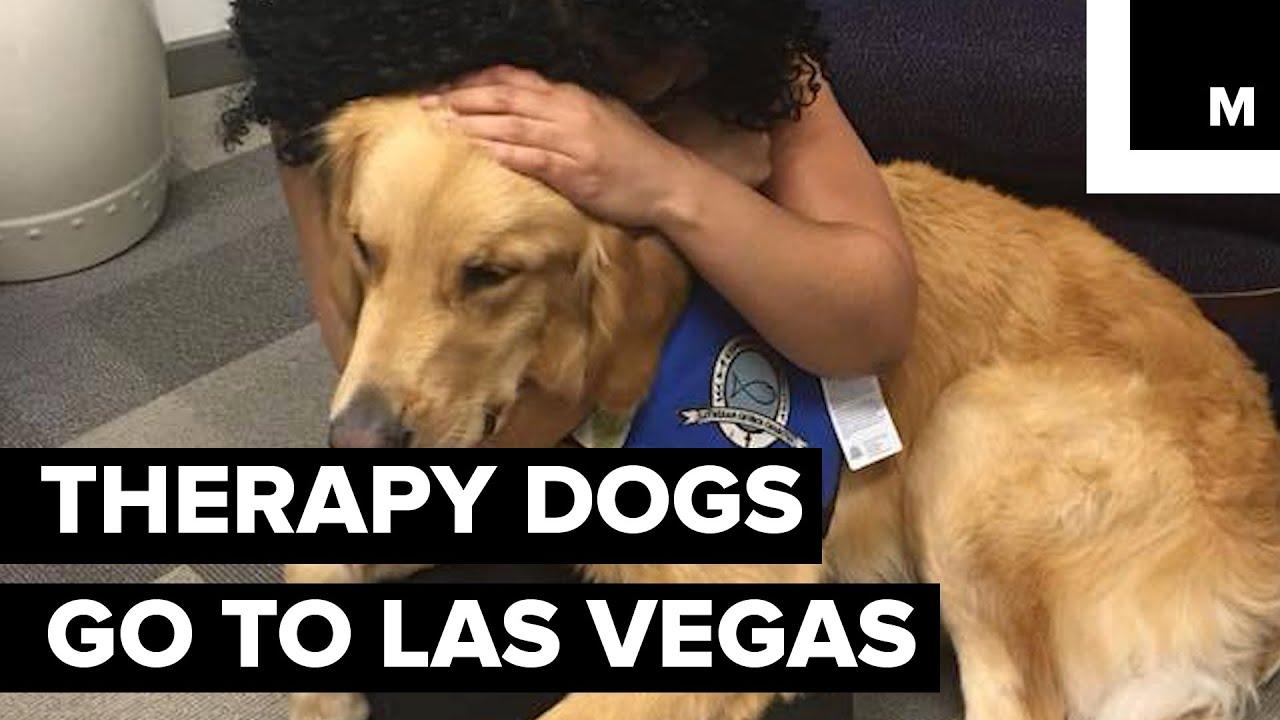 Las Vegas Therapy Dogs