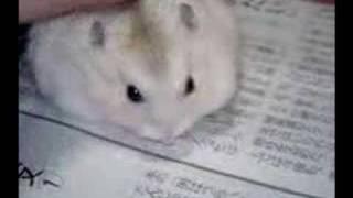 こんなマウスがあったらいいなーって思いませんか?
