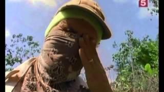 видео История возникновения пчелиного улья, виды ульев