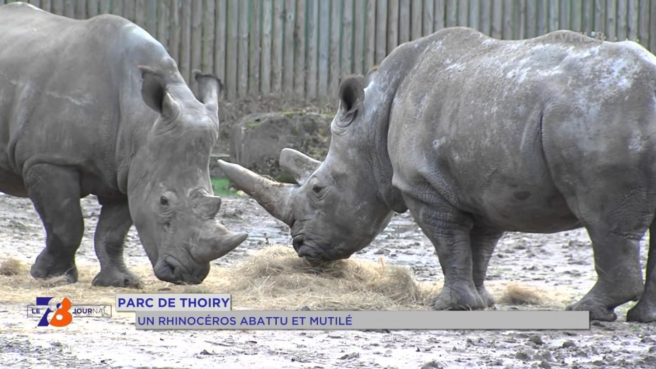 Parc de Thoiry : un rhinocéros abattu et mutilé