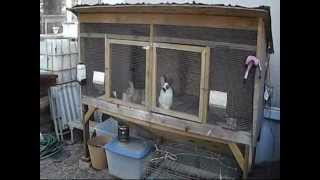 Upgrades To The Rabbit Hutch And Ideas For A Rabbitry With Freedoms Garden.