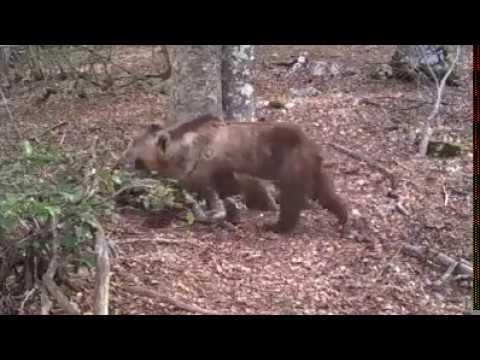 Telecamera nascosta nel bosco - Hidden camera in the forest 365 days