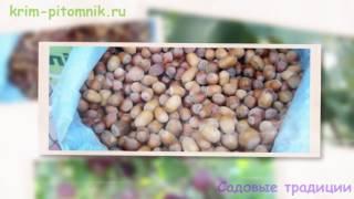 видео Купить саженцы с доставкой в Днепропетровск
