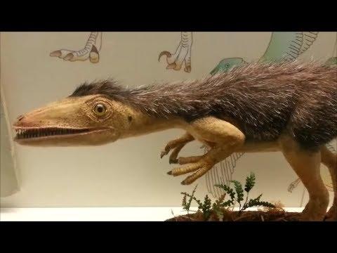 Frankfurt Senckenberg Dinosaur Museum (135)