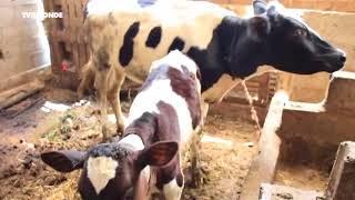 Au Maroc, le boycott contre la vie chère se répercute sur les laitiers