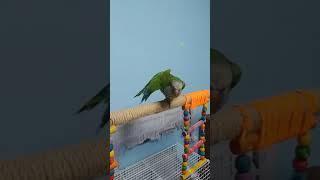 스트레칭하는 앵무새! 몸 푸는건 왼쪽 부터지!