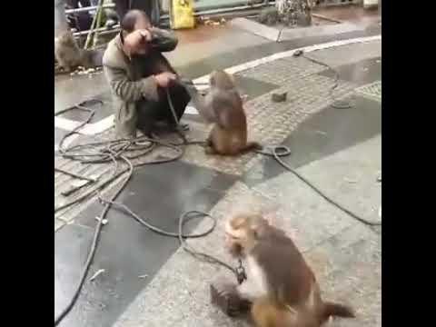 Monkeys fun by Hamdan Amir