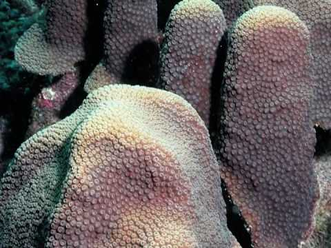 Caribbean Coral Reef Biology and Ecology