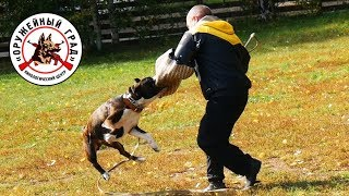 Дрессировка хозяином своей собаки на защиту без фигуранта