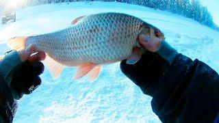 ПОДКОВА НЕ ОСТАВИТ БЕЗ УЛОВА Зимняя рыбалка 2020