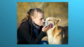 The Online Dog Trainer Review - Video Testimonial - The Online Dog Trainer Doggy Dan