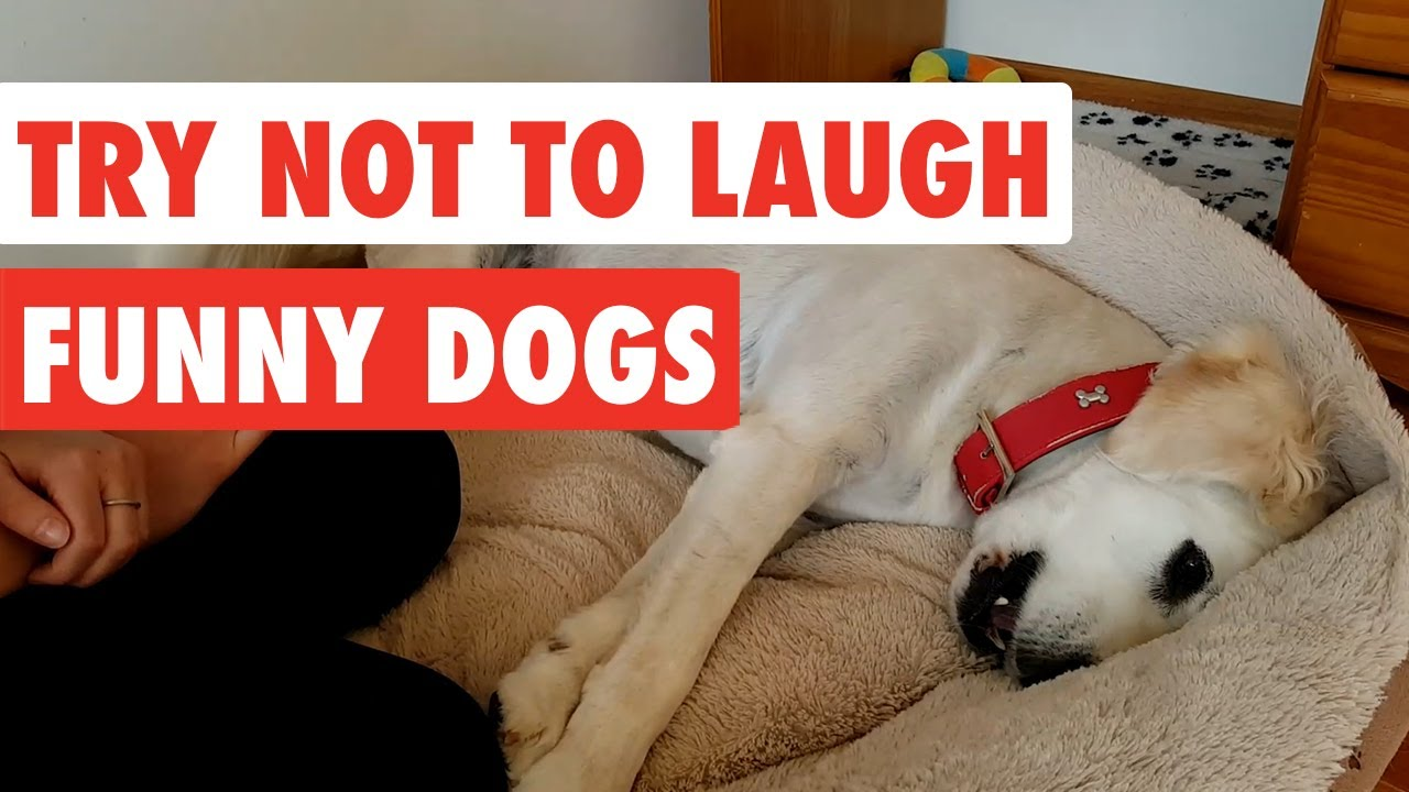 Funny dogs videos compilation by The Pet Collective