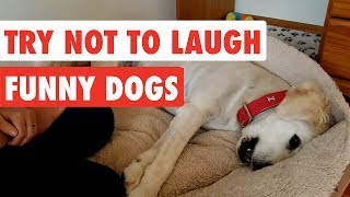 Try Not To Laugh | Funny Dog Video Compilation 2017