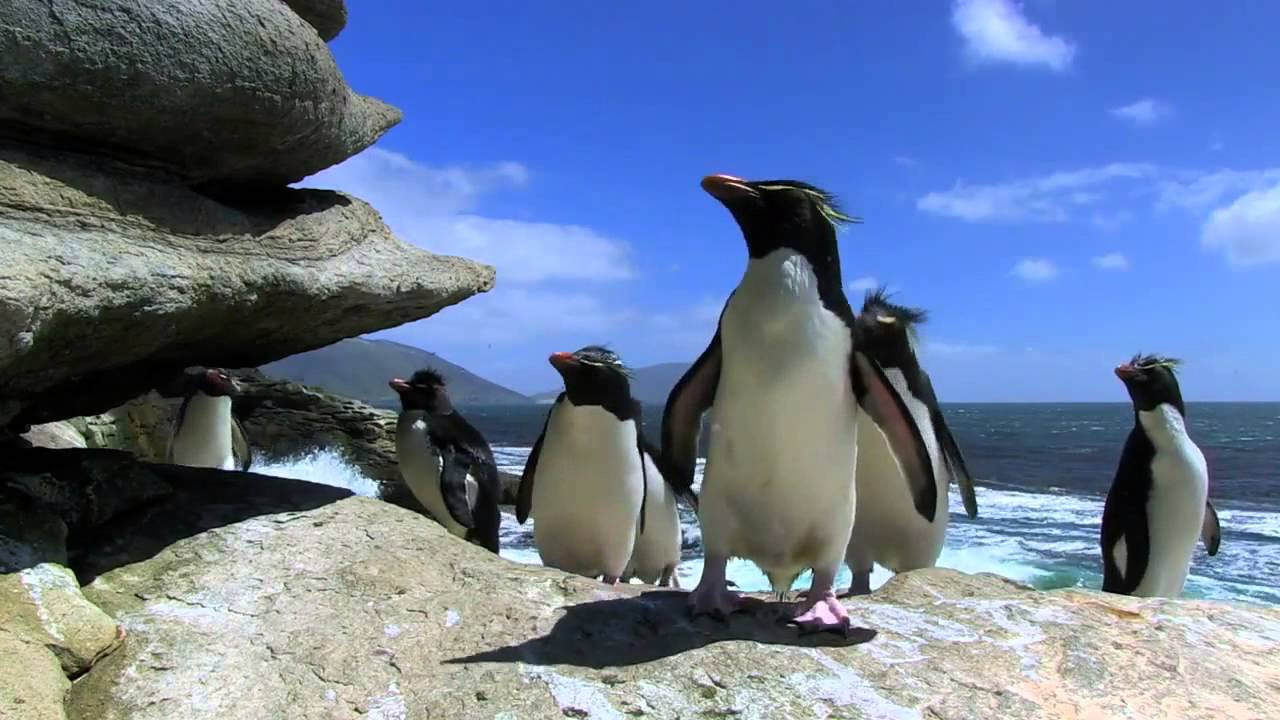 Compilation chute de pingouins et de manchots fou rire - Pingouin rigolo ...