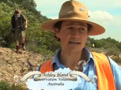Staff Vounteering with Conservation Volunteers Australia