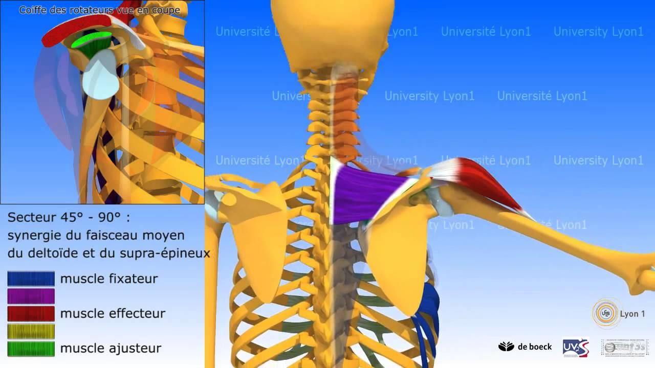 Biomecánica de la abduccion hombro - YouTube
