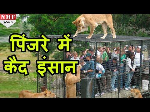 यहां जानवर नहीं इंसान होते हैं पिंजरों में कैद |Don't Miss !!! Mp3