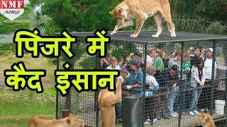 यहां जानवर नहीं इंसान होते हैं पिंजरों में कैद |Don't Miss !!!