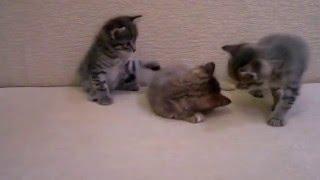 Котята \ Cats Отдадим котят в добрые руки (^_^)