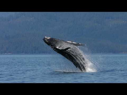 Whale Heritage Site update - Vancouver Island North