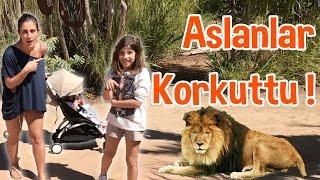 avustralya da aslanlar kkredi korktuk su aygırı tısladı tırstık   bizim aile