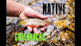 Native Greenback Cutthroat Trout | Fly Fishing