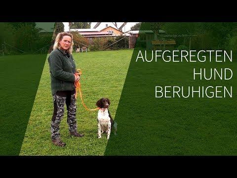 Aufgeregten Hund beruhigen ► Aufgeregter Hund ► Das geeignete Hundetraining